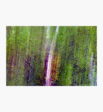 The Forest Matrix. Photographic Print