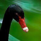 Black Swan Portrait by Joe Jennelle