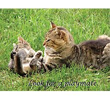 Cats Play - Look for a Playmate Photographic Print