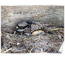 Killdeer Baby Finds a Quiet Place To Be Poster