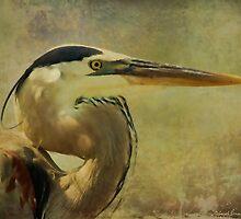 Heron On Texture by Deborah  Benoit