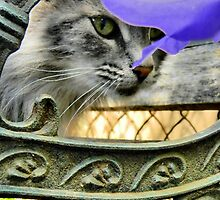 Cat on bench  by Courtneystarr