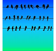 Birds on a Wire No.1 Photographic Print