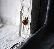 Ladybug by Karyn Boehmer