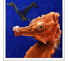 LINED SEAHORSE (Hippocampus erectus) DIGITAL PAINTING. NOT A PHOTOGRAPH by DilettantO
