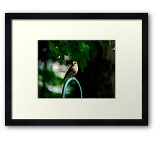House Finch - Female Framed Print