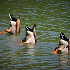 Land Park Synchronized Swim Team by Xcarguy