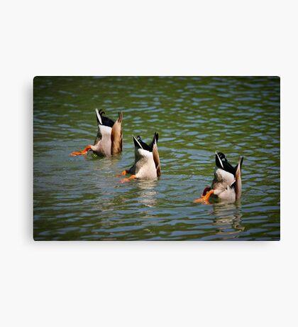 Land Park Synchronized Swim Team Canvas Print