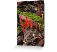 red staghorn Greeting Card