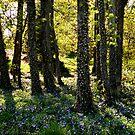 Forest of Wonder by njumer