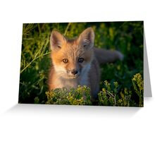 Portrait of a Red Fox Kit Greeting Card