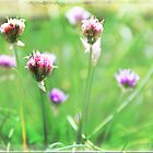 chives by hannes cmarits