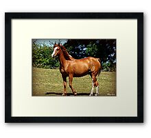 Bronze and Beautiful Framed Print