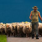 The herder by THHoang