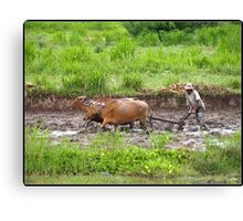 The Price of Rice Canvas Print