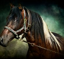 Gypsy Spirit by Tarrby
