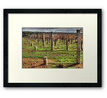 A Frankland Vineyard Framed Print