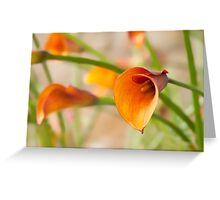 Calla Study - II Greeting Card