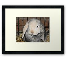 What? Your ears don't touch the ground? Framed Print