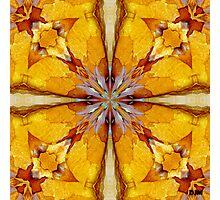 Flakes Of Sunshine Photographic Print