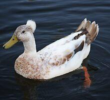 Mohawk Punk Duck by Trent Suski
