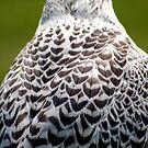 feathers by Roslyn Lunetta