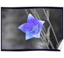 Sentimental Blue Poster