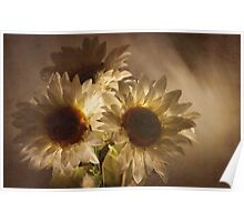 Light touched sunflowers Poster
