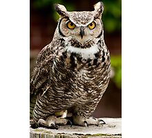 Barney the Great Horned Owl Photographic Print