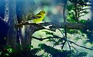 Sing Little Yellow Bird by Elaine  Manley