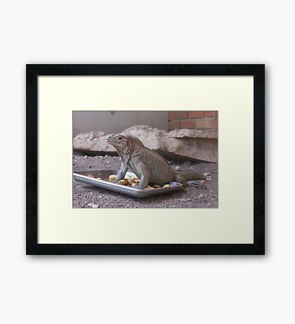 My Lunch, Stay Away Framed Print