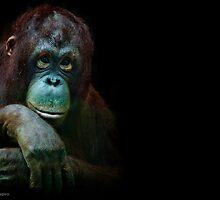 Orangutan chicks dig me...especially Lucy by alan shapiro
