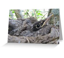 I Know I Need To Let You Spread Your Wings Greeting Card