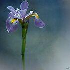 Harlem Meer Iris by Chris Lord