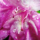 Rhododendron in the rain by Marcia Rubin
