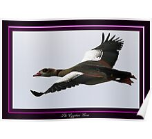 The Egyptian Goose Poster