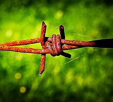 Barb Wire by Jeff Lewis