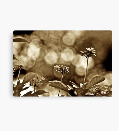 Her Sepia scenery...Got 2 Featured Works Canvas Print