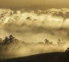 """'Mist amongst the Gums"""" by debsphotos"""