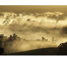 "'Mist amongst the Gums"" Photographic Print"