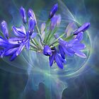 Ipheion by Dale Lockridge