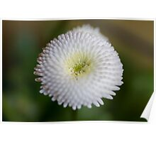 flower in the garden Poster