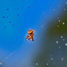 """""""The Little Spider"""" by the57man"""