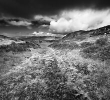 A Path Less Trodden BW by Andy Freer