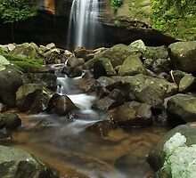 Serenity - Buderim Forest Park by Stuart Cox