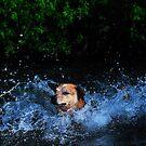 Splash by SamTheCowdog