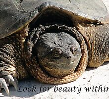 Look for Beauty Within - A Beautiful Turtle by Deb Fedeler