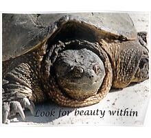 Look for Beauty Within - A Beautiful Turtle Poster