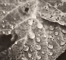 Fall Magnified by Talitha Murengi