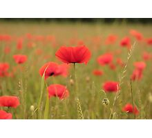 red field Photographic Print